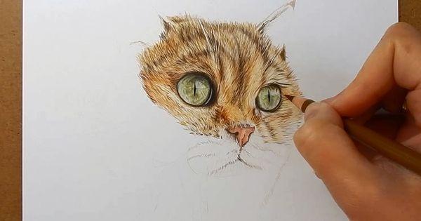 color pencil drawing tutorial pdf