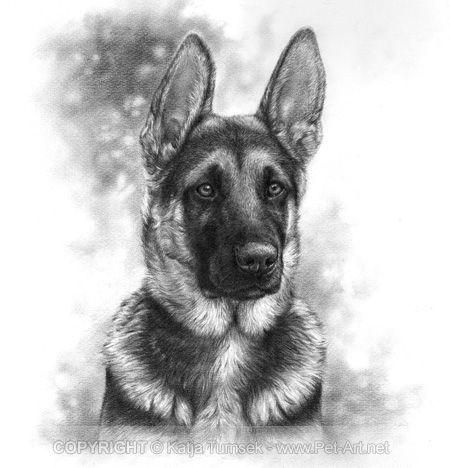 german shepherd drawing tutorial