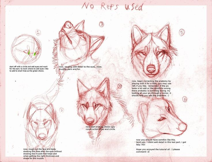 anime wolf drawing tutorial