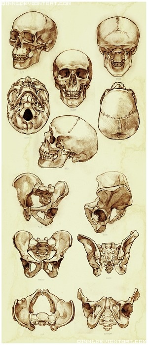 human skull drawing tutorial