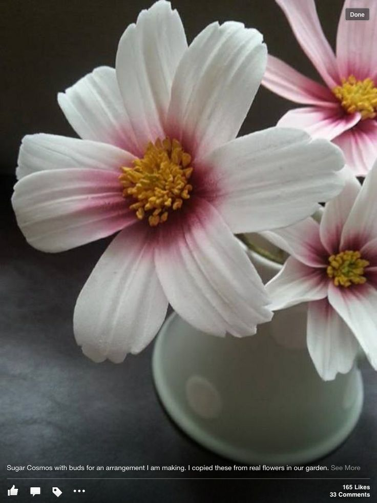 david austin rose tutorial